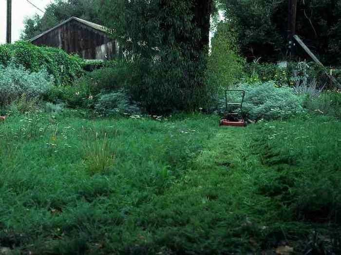 San Marcos Growers >The Yarrow Lawn