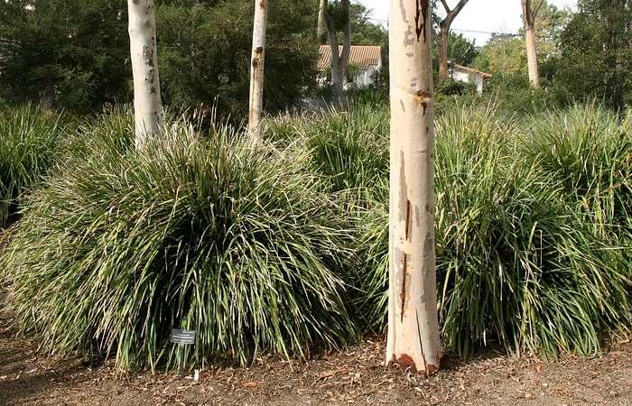 Planting Under Eucalyptus Trees : The matt rushes at san marcos growers